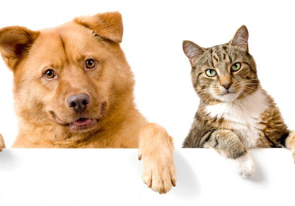 אימוץ חיית מחמד – כלב או חתול?